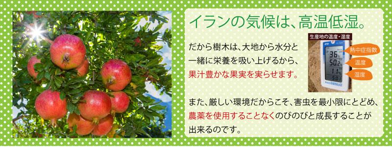 ざくろ本舗のザクロジュースは、高温低湿の厳しい自然の中で、農薬を使わずに育てたザクロを使用しています。